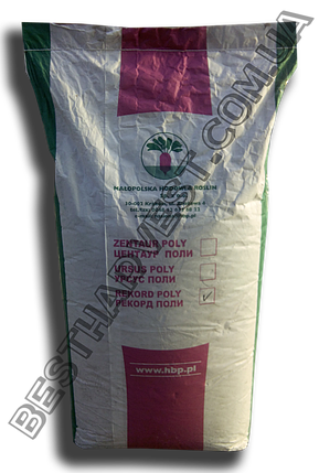 Семена свеклы «Рекорд Поли» 20 кг (мешок), фото 2