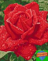 Картина по номерам Нежность розы Ніжність троянди 40*50см KHO3045 Розпис по номерах