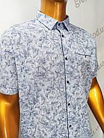 Мужская рубашка,Батал, Amato. AG  20006(b). Размеры: 2XL,3XL,4XL,5XL., фото 1
