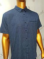 Мужская рубашка Amato. AG. 29397-2(s). Размеры: 2XL,3XL,4XL,5XL., фото 1