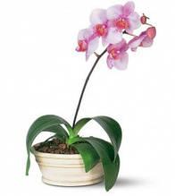 Все для орхідей