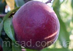 Персик Роял Глорі(ранньо-середній,смачний,урожайний) 2х річка