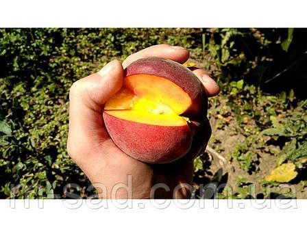 Персик Шугар Тайм (средне ранний,очень вкусный), фото 2