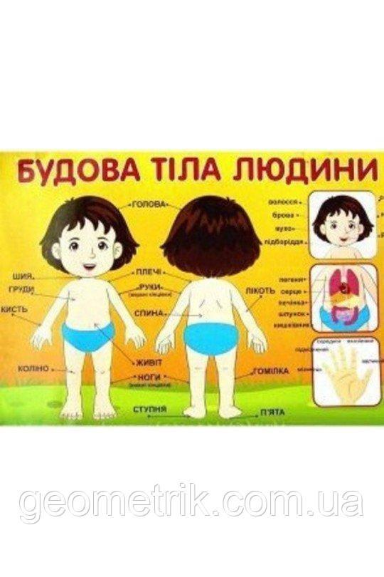 Плакат. Будова тіла людини. 0209 арт. 13104116У ISBN 4823076132644