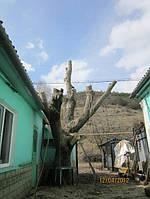 Спил деревьев Киев и область