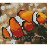 Набор алмазной вышивки Рыба клоун