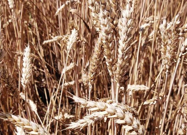Протравители и микроудобрения Айдамин для предпосевной обработки семян