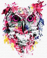 Картины по номерам - Сова в красках