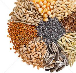 Семена, Посевной Материал