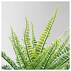 IKEA FEJKA ( 304.339.45) Штучна рослина в горщику 9 см, фото 2