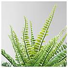 IKEA FEJKA ( 304.339.45) Штучна рослина в горщику 9 см, фото 8