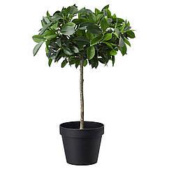 IKEA FEJKA (003.953.08) Штучна рослина в горщику , для приміщення/вулиці/Фікус Бенджаміна 12 см