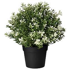IKEA FEJKA ( 903.751.55) Штучна рослина в горщику 9 см