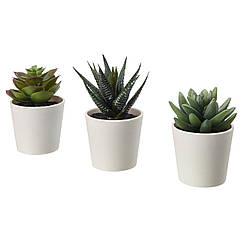 IKEA FEJKA ( 203.953.31) Штучна рослина в горщику, для приміщення/вулиці Сукулент 6 см 3 штук