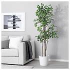 IKEA, FEJKA,  (303.751.58) Штучна рослина в горщику  21 см, фото 2