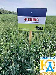 Семена озимой пшеницы Феликс (1 репр)