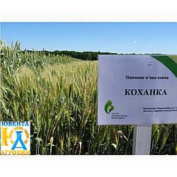 Семена озимой пшеницы Коханка (Елита)