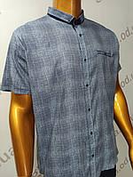 Мужская рубашка Amato. AG  29744(g).Батал. Размеры: 2XL,3XL,4XL,5XL., фото 1