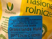 Семена клевера белого декоративного, Grasslands Huia  Грассландс Хайя 0.5 кг  Агронас Польша