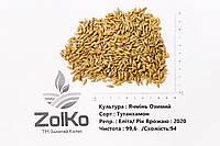Тутанхамон (двуручка) Ячмінь Еліта врожай 2020