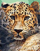 """Картина по номерам """"Леопард"""" 40*50 см в коробке, ArtStory + акриловый лак, фото 1"""