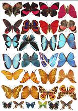 Вафельная картинка Бабочки 2