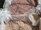 Озимий часник для посадки Сорт Прометей насіння(воздушка) 100 гр, фото 4