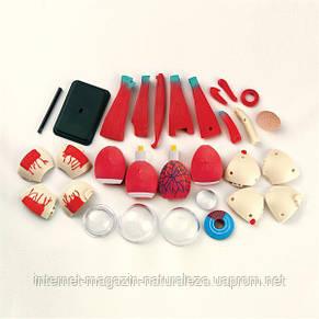 Набор для обучения и НУШ Edu-Toys Модель глазного яблока сборная, 14 см (SK007), фото 3