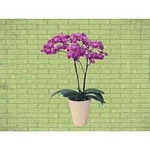 """Наклейка  """"Орхідея"""""""