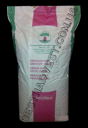 Семена свеклы «Центаур Поли» 20 кг (мешок), фото 2