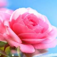 Цветы - Скинали каталог