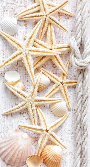 Панель пластиковая Морская звезда (декор)