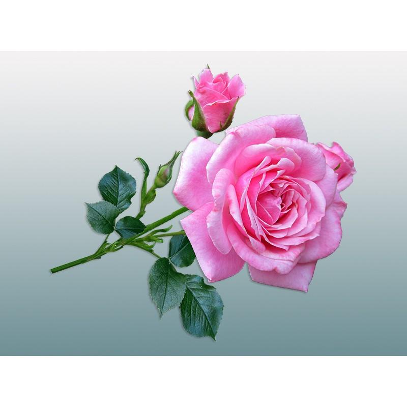 """Наклейка """"Троянда"""""""