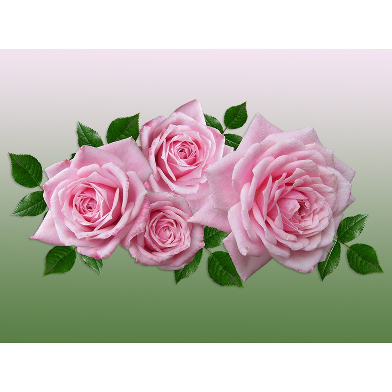 "Наклейка ""Троянди"""