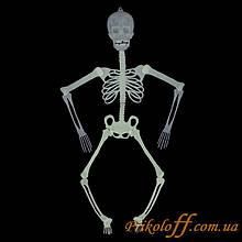 Скелет светонакопительный