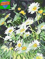 Картина по номерам Ромашки (цветной холст) 40*50см Розпис по номерах