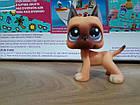 Lps littlest pet shop стоячки - лпс датский дог Hasbro №244 -старая коллекция, фото 2