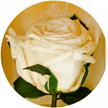 Долгосвежая роза Белый Бриллиант в подарочной упаковке (не вянут от 6 месяцев до 5 лет), фото 2