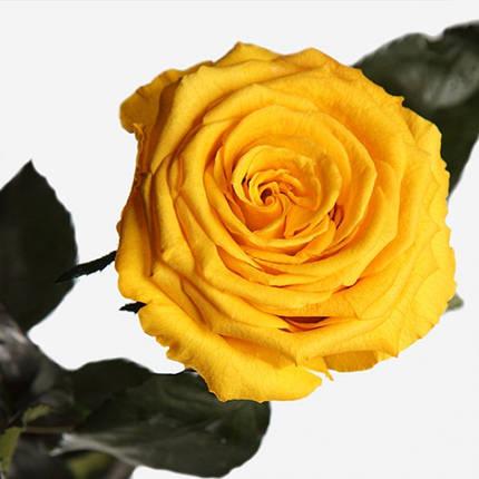 Три долгосвежих розы Золотистый Хризоберилл в подарочной упаковке (не вянут от 6 месяцев до 5 лет), фото 2