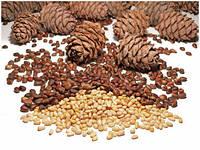 Орехи кедровые неочищенные
