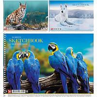 Альбом для малювання на пружині 30/120 A4 картон PB-SC-030-287/Школярик
