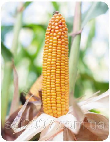 Семена кукурузы Бейм