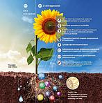 Мікоризні препарати для підвищення продуктивності рослин в умовах посухи.