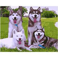 Набор для рисования Brushme Картина по номерам BGX3842 Милые Хаски 40х50 см