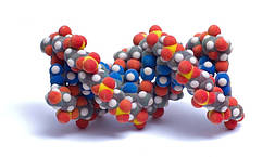 Що таке амінокислоти