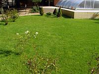 Посадка газонной травы