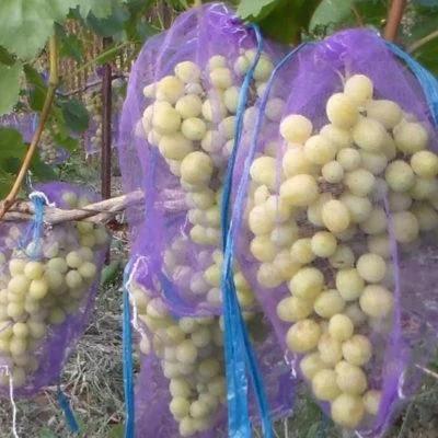 Мешки от ос на виноград фиолетовые 5 кг, 28*40 см (сетка-мешок для винограда). От ос, мошек и др. насекомых!!!