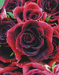 """Алмазная мозаика """"Алые розы"""" (розы, красные, цветы, подарок, женщине)"""