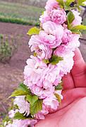Миндаль цветущий розовый