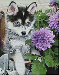 "Алмазная мозаика ""Щенок хаски и георгины"" (щенок, хаски, собака)"